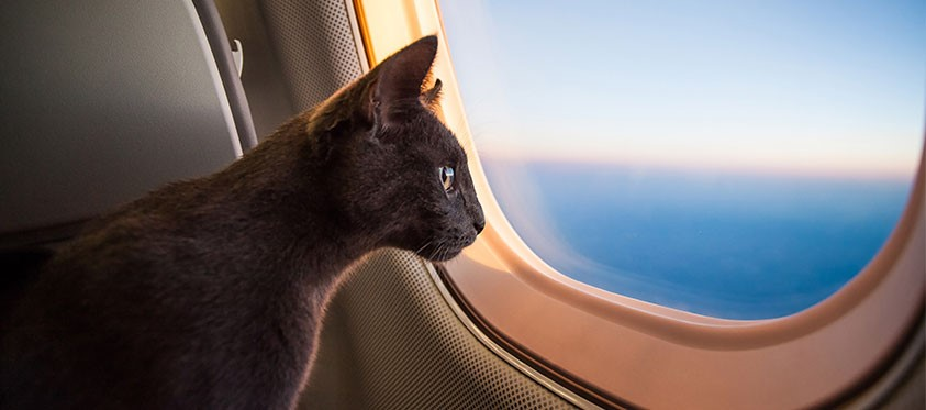Pet Travel Scheme