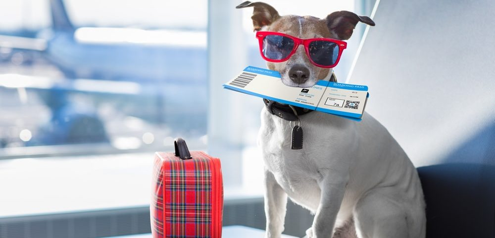 Essential Guide To Travelling With Your Pets Abroad Manchester Airport