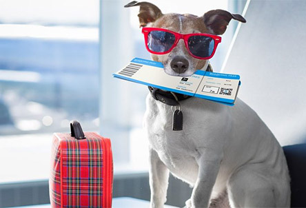 Essential guide to travelling with pets