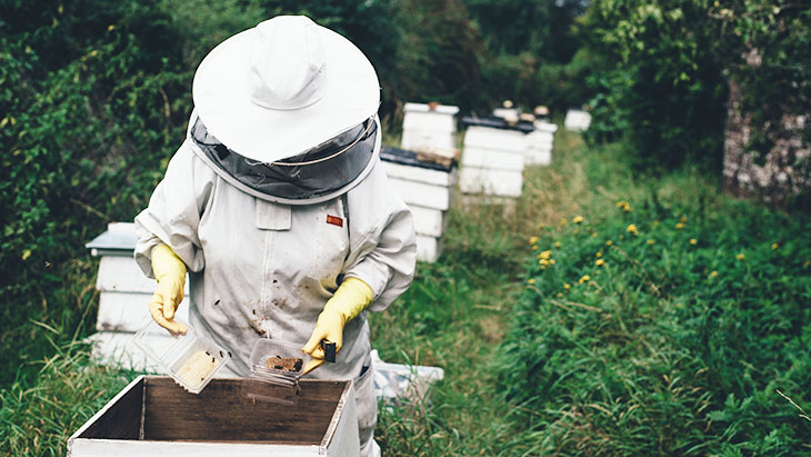A Box Of Bee Farmer Goodies
