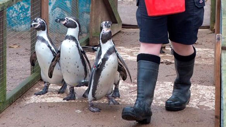 Win a family ticket to Twycross Zoo and a Penguin Experience!
